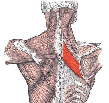 了我们身体的整体肌肉能够看上去更美观,要全方位训练你的肌肉