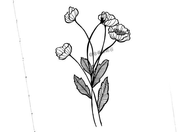 简笔画|各种花朵简笔画,寒假让孩子轻松认识各种花卉,快收藏!