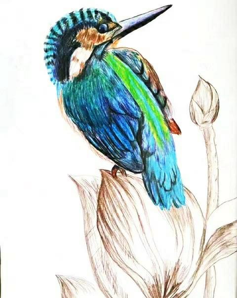 最美的彩铅手绘作品欣赏