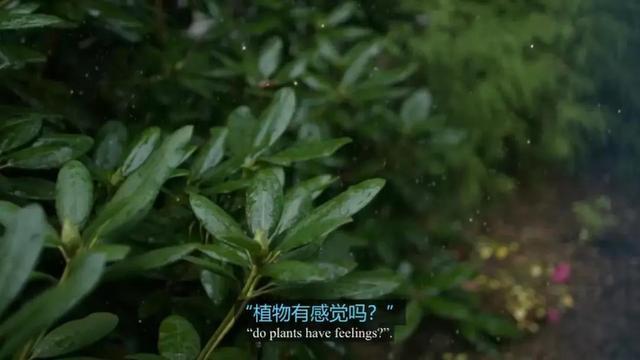 炉石传说树木学家第八关怎么过 冒险模式8/8通关攻略 - 87G手游网