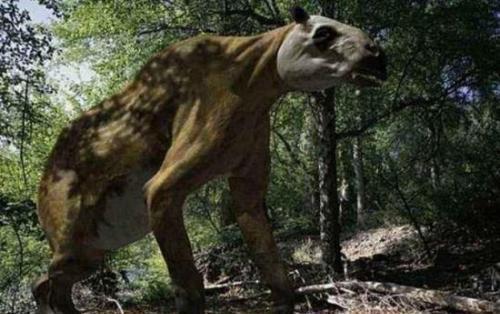 传说中的神农架怪物棺材兽,可能是一种史前生物