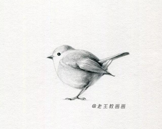 小鸟怎么画简单又好看