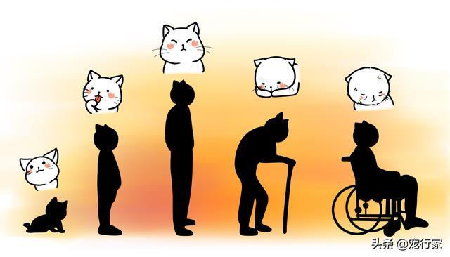 猫生病时的预警信号:行为变化、具体症状和疾病清单