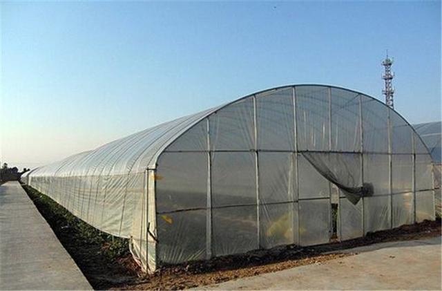 蔬菜温室大棚造价,你了解多少?