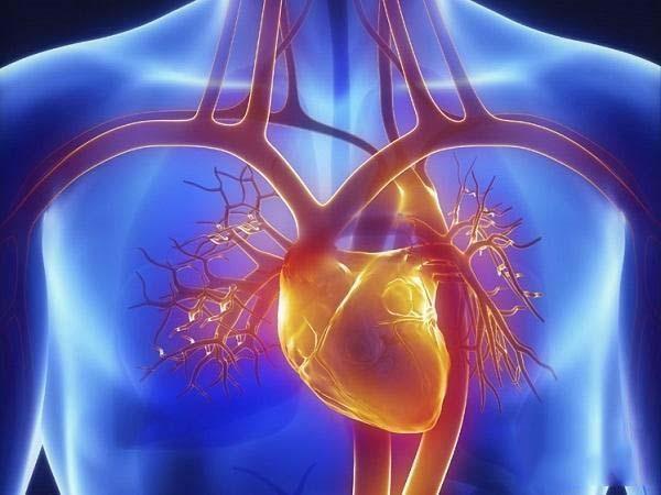 人体的哪些脏器最重要?对我们的身体起什么作用?