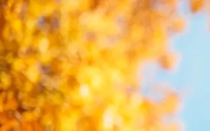 秋日枫叶图片