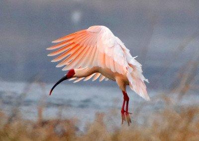 中国常见鸟类大全鸟名