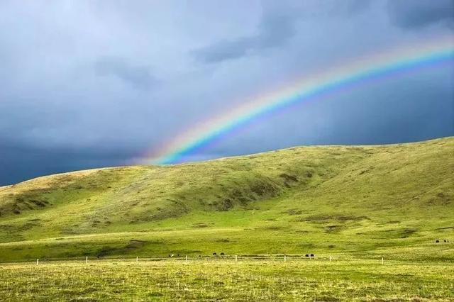 太美了!若尔盖草原今年首场花期来了