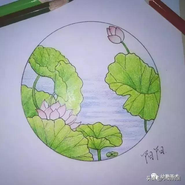 彩铅—简单手绘荷花