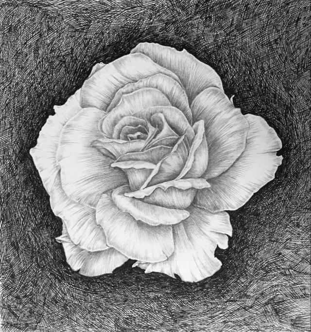 最简单铅笔画花朵图片_空间日志