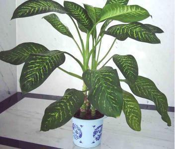 家中摆上这10种盆栽寓意满满,不仅美观还招财_东方头条