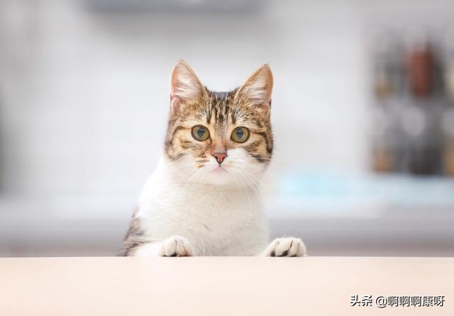 小猫钓鱼回家的图片