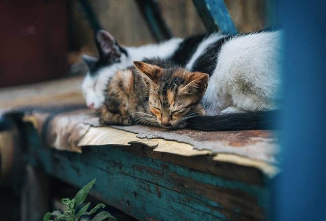 兽医告诉我:生病的猫咪可能会有这11个迹象,再节俭也要去看病!