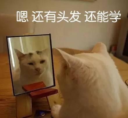 瞌睡样搞笑图片_猫咪的瞌睡样_搞笑图片_精品库