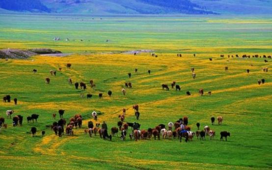 身家320亿的退伍军人,靠卖推土机发家,如今成为新疆首富 创业 第1张