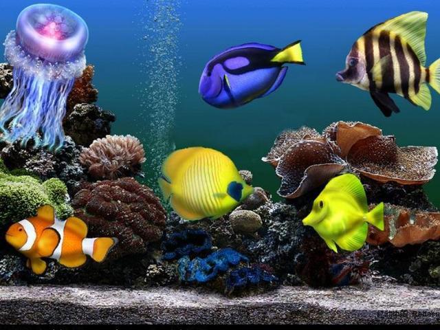你真的会给鱼缸换水?这几点你得注意了,可减少鱼儿生病率