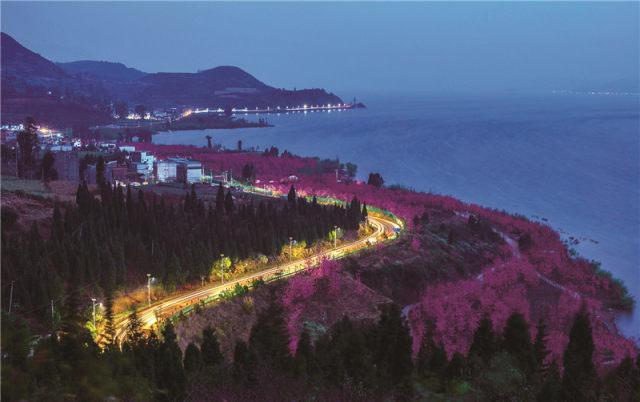 貴州哪里有櫻花