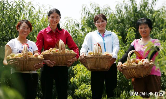 """全国农业劳动模范、许昌市""""最美退役军人""""孙继周"""