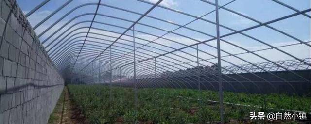 建造10亩温室大棚造价得多少? 日光温室大棚的造价是多少?_喜看网