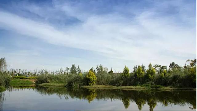 """...生态公园""""更名为""""河南省宝丰君文国家湿地公园""""_手机搜狐网"""