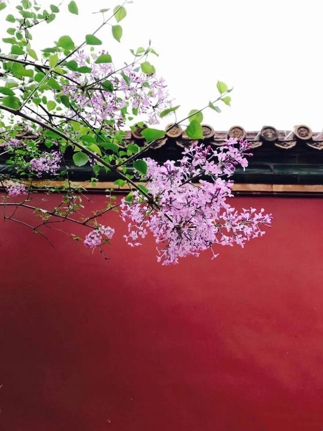 北京故宫手抄报图片