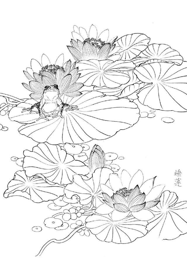 各种花朵的画法