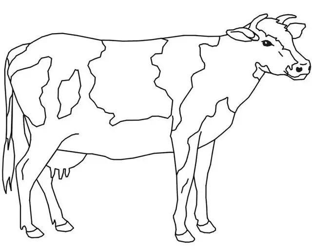 牛简笔画简单