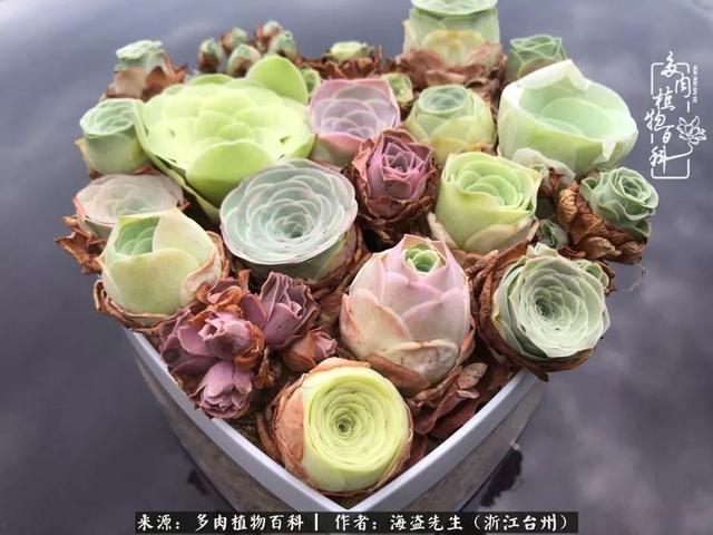 玫瑰花图片大全999朵