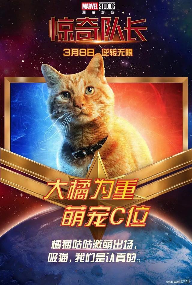 盘点这些年电影里出现的猫,作为爱猫人士你又知道多少部呢?