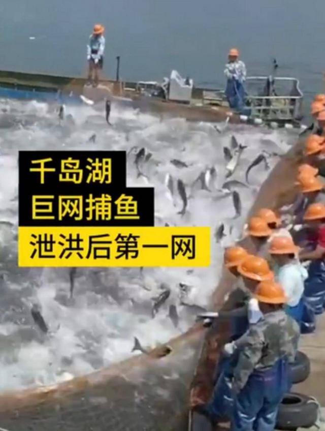新安江水库九孔泄洪冲走喝农夫山泉的胖头鱼,这家公司5000万没了