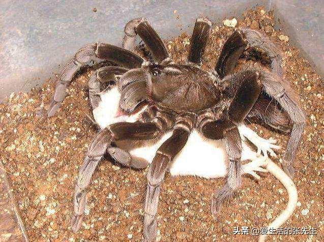 十大最恐怖毒蜘蛛图片