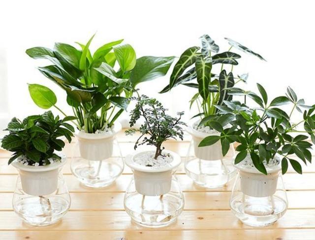 哪些花卉比较适合室内养?_华宇健康