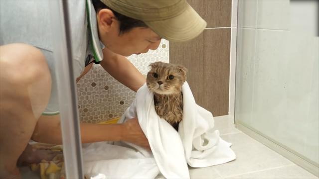 小貓貓可愛賣萌照片