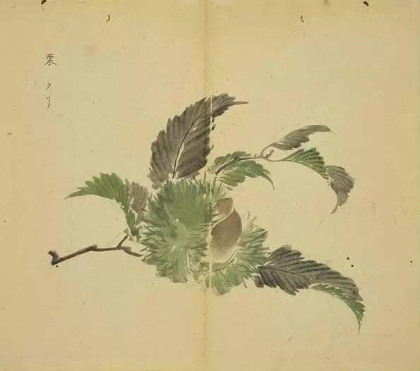 诗经植物图鉴