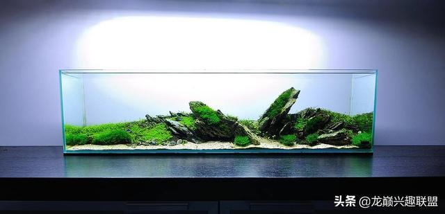 水榕木图片