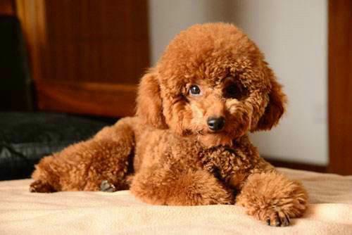 狗狗为什么会哭?除了感动这几个原因你知道吗?