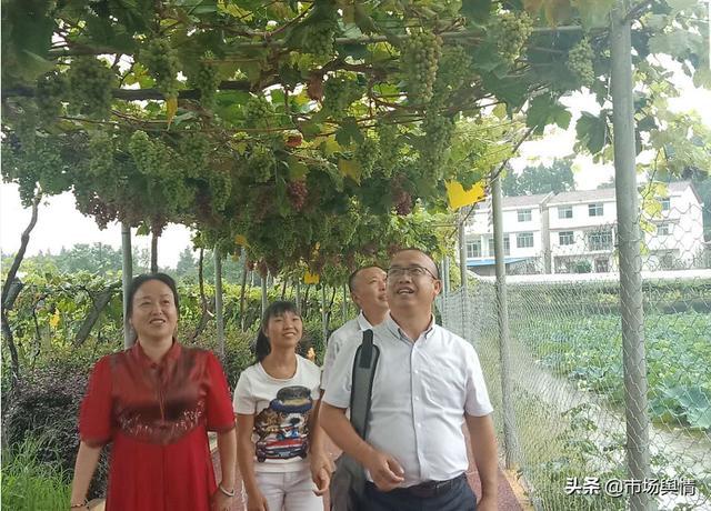 中国安全食品推广办公室工作组在四川遂宁龙婷生态农业考察调研