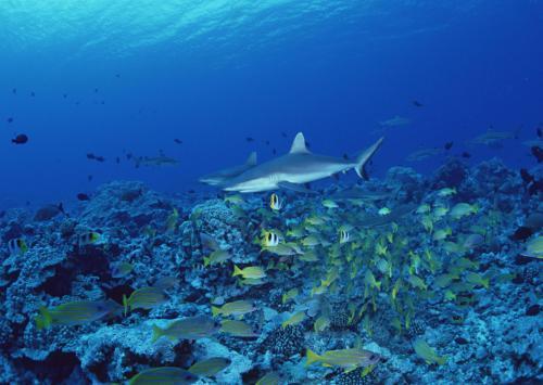 人类能够下潜到水下10000米吗,普通的潜水艇要被压成一块铁疙