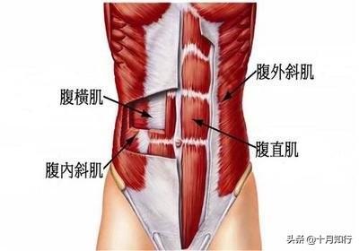 想要練出腹肌馬甲線並不難,減脂以後堅持6個動作,雕刻腹肌線條