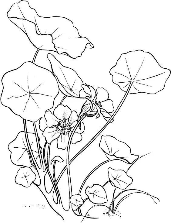 工笔白描花卉临摹图片