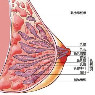 女性身体构造图解大全