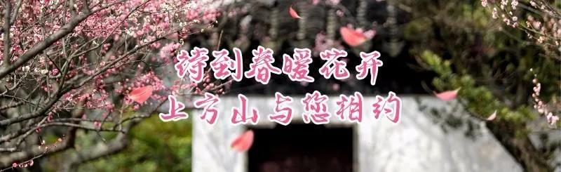 苏州上方山森林公园,距离市区4公里,樱花绽放,百花争艳美如画