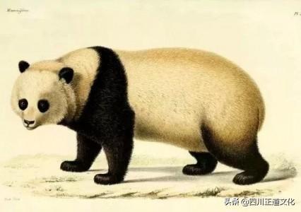 【熊猫CD-800】报价_参数_图片_熊猫CD-800报价-ZOL中关村在线