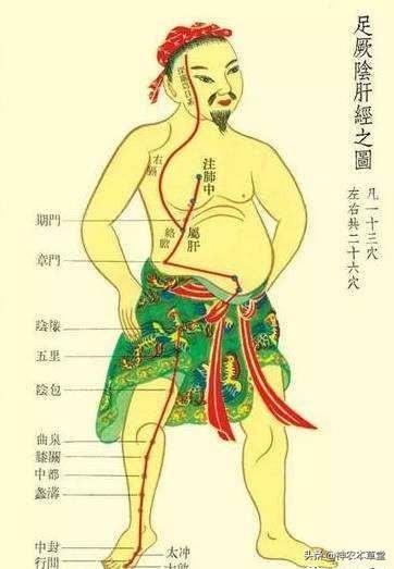 足厥阴肝经循行图片