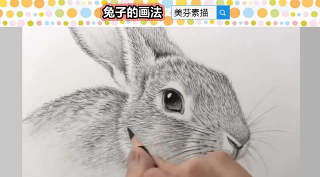 画素描的教程,兔子应该这样画,才会生动形象