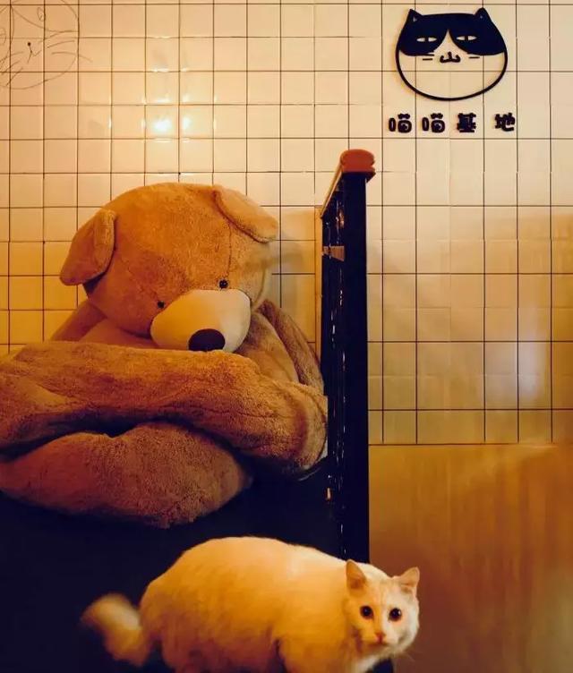 开宠物店暴利?全案解析宠物行业令人费解的低收入真相