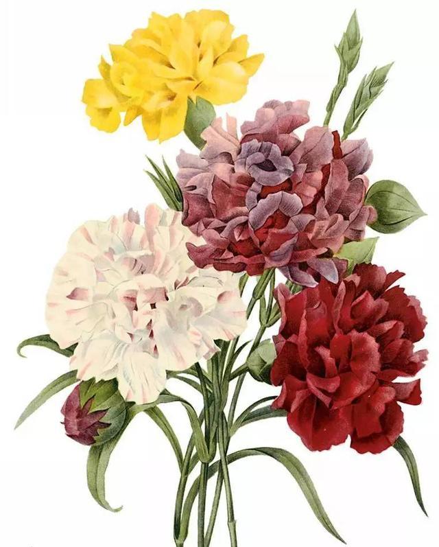 手绘花图片_手绘花素材_手绘花模板免费下载-六图网
