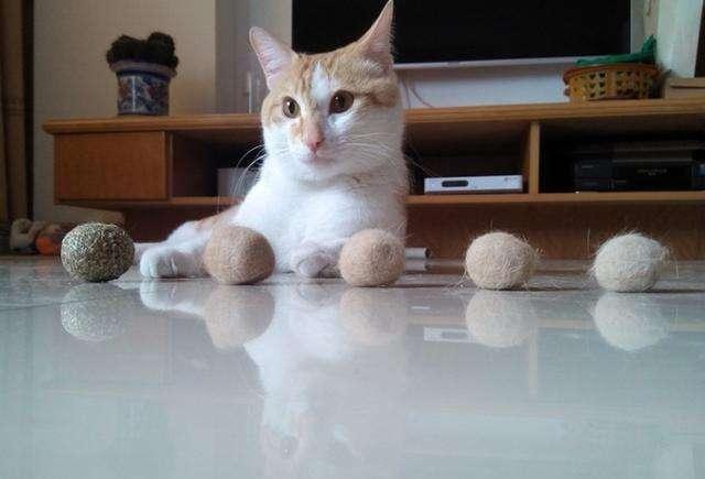 养猫七年,我发现猫咪真的有不少缺点