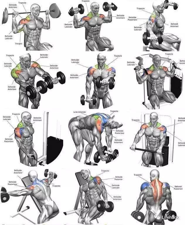 如何有效锻炼身体肌肉_健康经验_快速问医生_有问必答