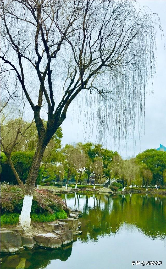一城名胜半归湖-宁波月湖公园